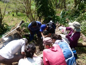 Students in Panama exploring the micro-ecosystem of the palm tree species Attalea butyracea. Photo: JK Peterson.